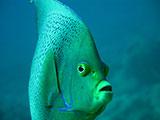 Diving Madagascar