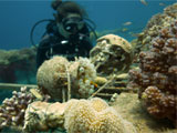 Corals that grow faster in warm water could beat climate change