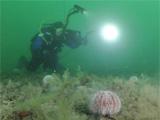 Diver on damaged reef