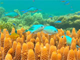 Fish exposed to oil make risky choices