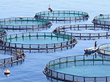 A tiny fraction of oceans could satisfy the world's fish demand