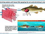 Warmer waters from climate change will shrink fish