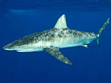 Sharks smarter than we think