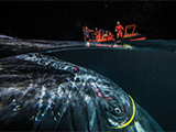 Hacker, the humpback whale who got tangled in an internet cable