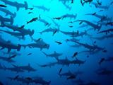 Diving Galapagos