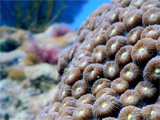 http://www.pewtrusts.org/en/research-and-analysis/blogs/compass-points/2017/05/03/tenacious-d-may-help-ailing-coral-reefs