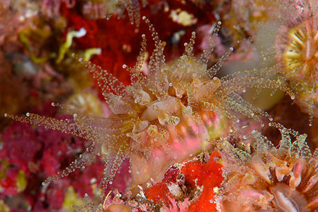 Coral Polyp photographed in Malta survey