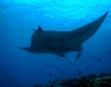 Revillagigedo marine reserve will be the largest in North America