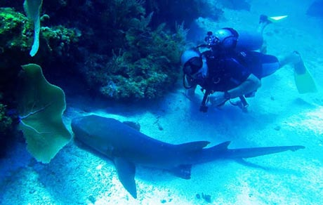 Diving with nurse shark off Little Corn Island