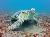 How Egypt's government plans to save the turtles