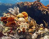 Underwater Street View