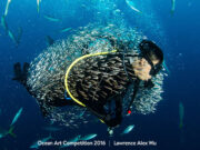 Diver in bait ball by Lawrence Alex Wu