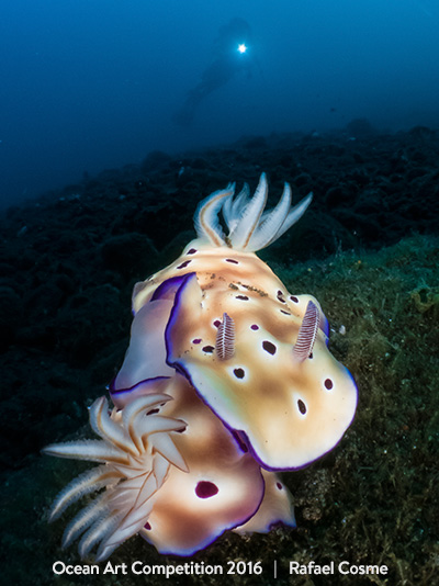 1st Place Nudibranchs by Rafael Cosme Daza
