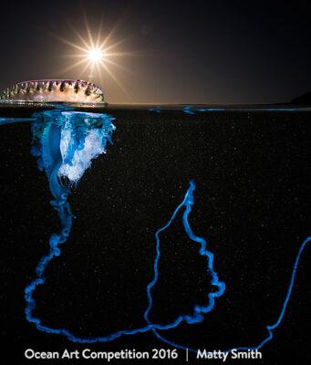 Best in Show Underwater Photograph
