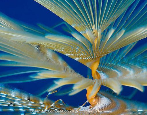 Dancer Sea Worm by Lorenzo Terraneo
