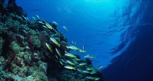 Diving in the Red Sea