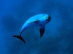 Dolphin by Tim Nicholson