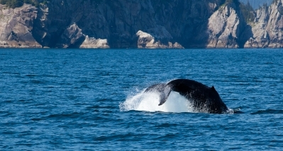Lawsuit Seeks Plan for Most Endangered Large Whale in World