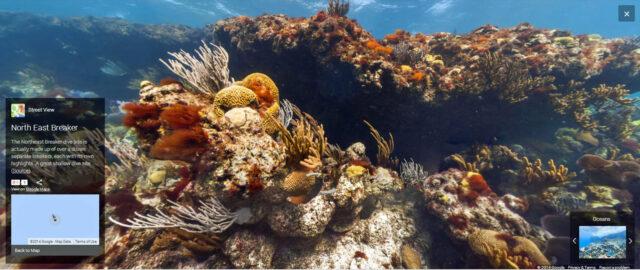 Underwater Street View -Bermuda, North East Breaker