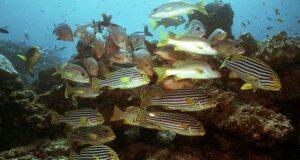 SCUBA Fish Count