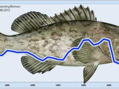 Grouper recovery graph