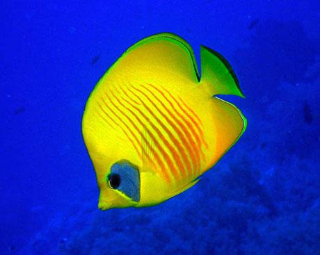 Removing top predators doesn't help smaller reef fish