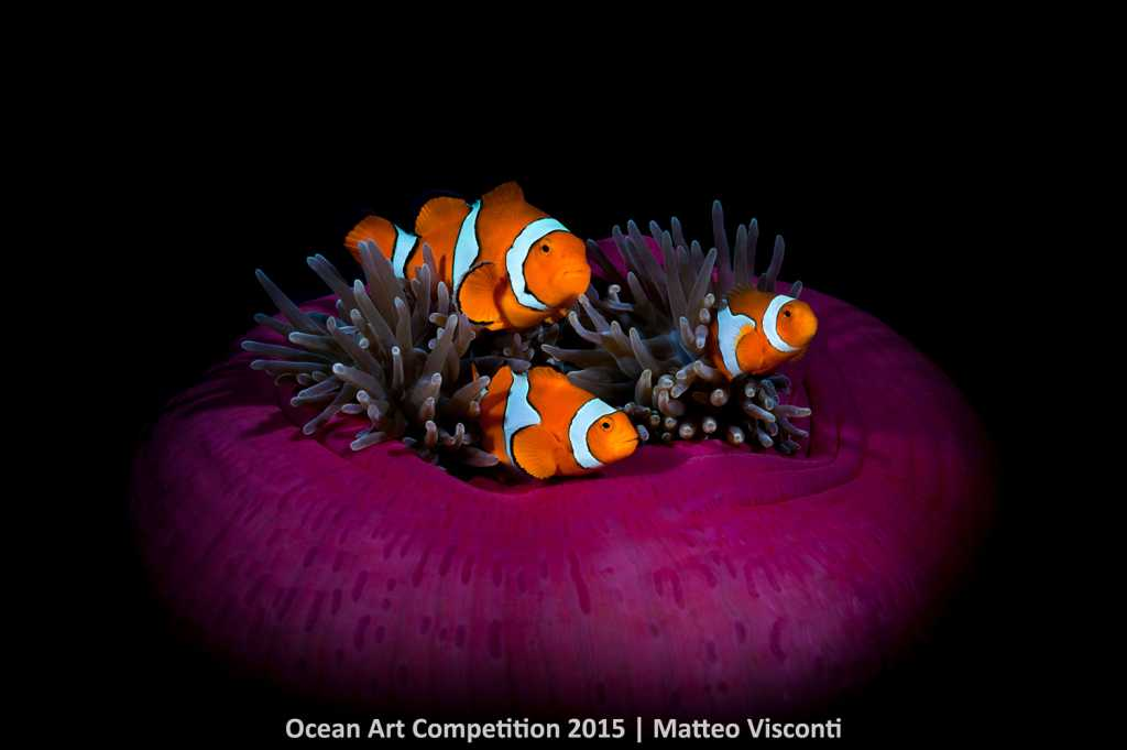 2st Place Wide-Angle Matteo Visconti, Fathers Reef, Kimbe Bay, Papua New Guinea