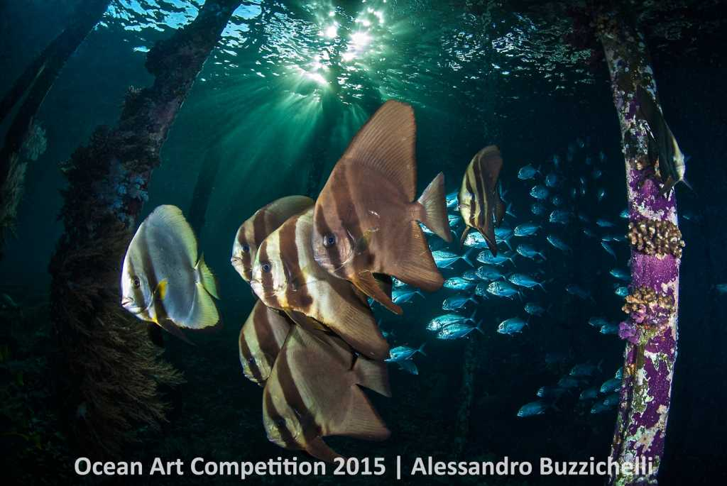 Taken on island Wai is located in Raja Ampat. Batfish and jackfish 4th Place Wide-Angle