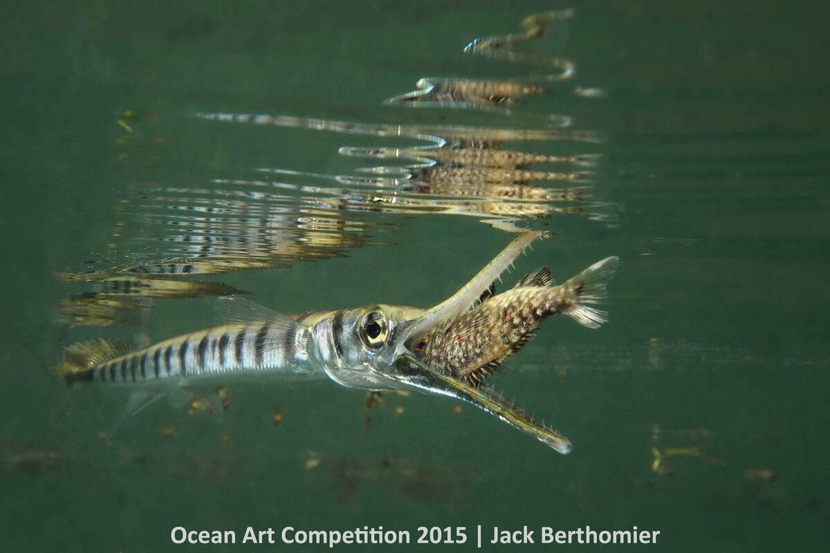 ocean-art-fish