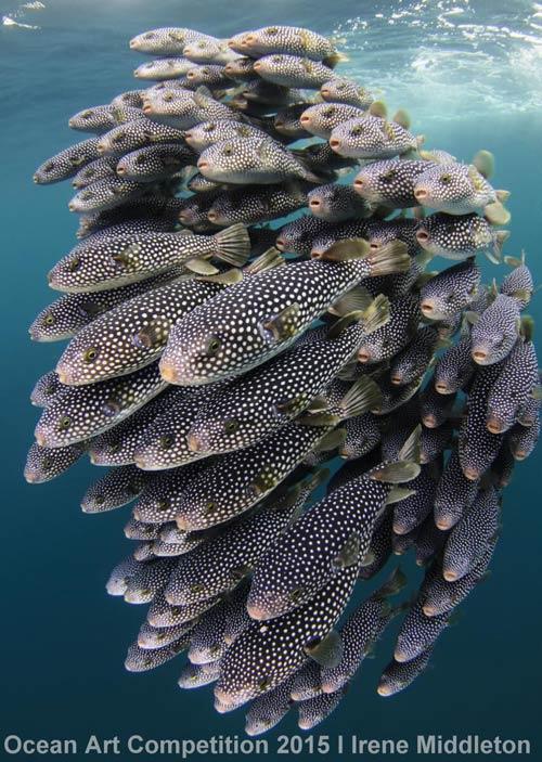 ocean-art-middleton
