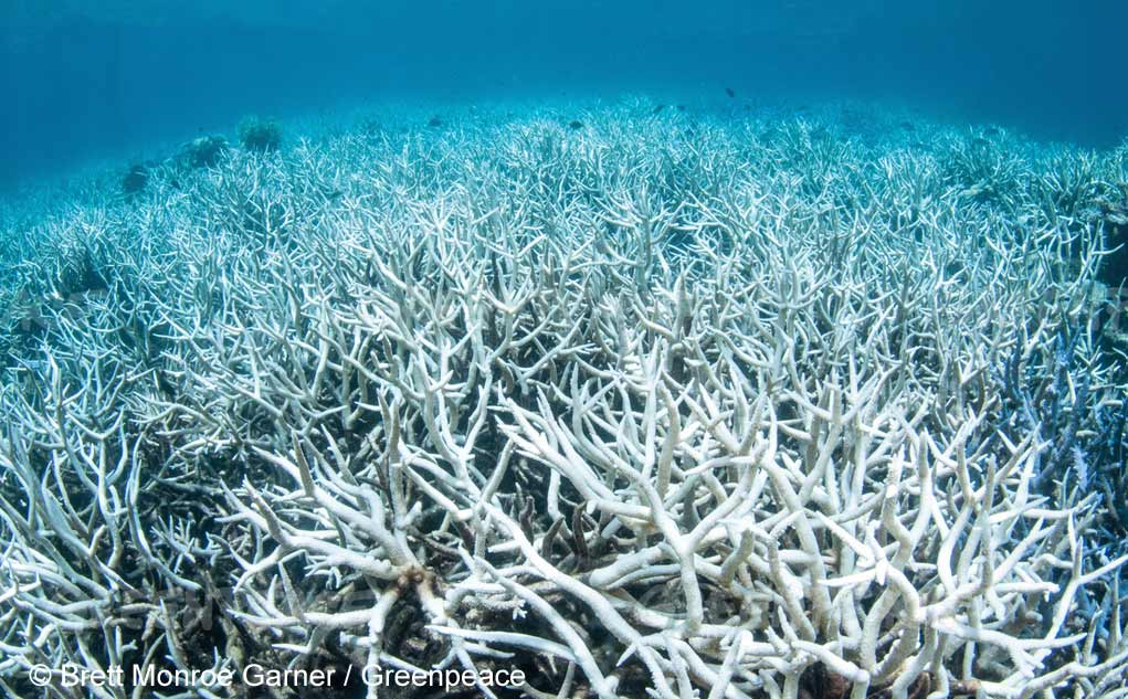 The Health of Great Barrier Reef Is Jeopardized by Bleaching