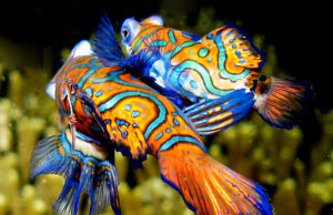PADI Sold to Mandarinfish Holdings