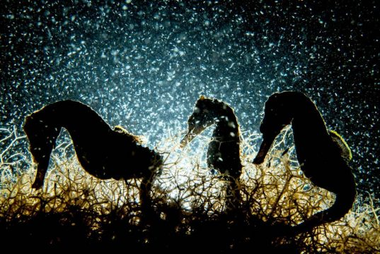 Macro winner - Seahorse Density by Shane Gross