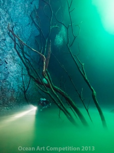 A halocline layer and tree create an eerie mood in Cenote Angelita near Tulum, Mexico