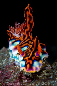 Nudibranch, Horseshoe Bay, Komodo, Indonesia
