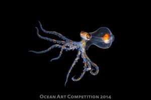 """""""Dancing Hunter""""  Shot in Tahiti with Nikon D800 by Anthony Berberian"""