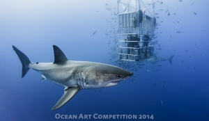 """Animal in Cage"" by Davide Lopresti. Shot at Isla Guadalupe, Mexico with Nikon D600"