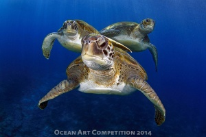 Turtles by Montse Grillo shot in Tenerife