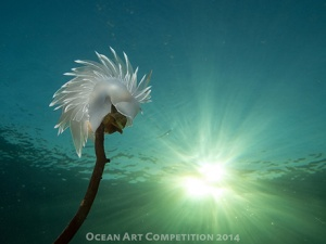 Alabaster Nudibranch by Jackie Hildering