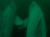 basking sharks holding fins
