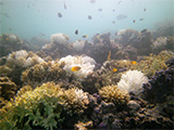 Coral reef with bleaching