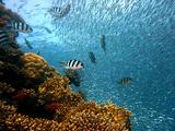 Diving Kenya