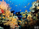 Fiji coral reef