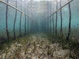 Fish fence