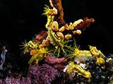 Komodo marine life
