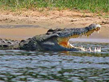 Diving with Crocodiles in Botswana