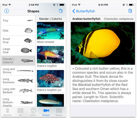 Oman Fish ID App showing Arabian Butterflyfish
