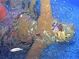 Prop from avenger tornado bomber in Truk Lagoon