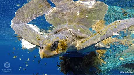 Turtle and fising net