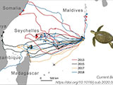 turtle migration map